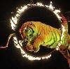 Цирки в Архангельском