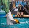 Дельфинарии, океанариумы в Архангельском