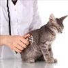 Ветеринарные клиники в Архангельском